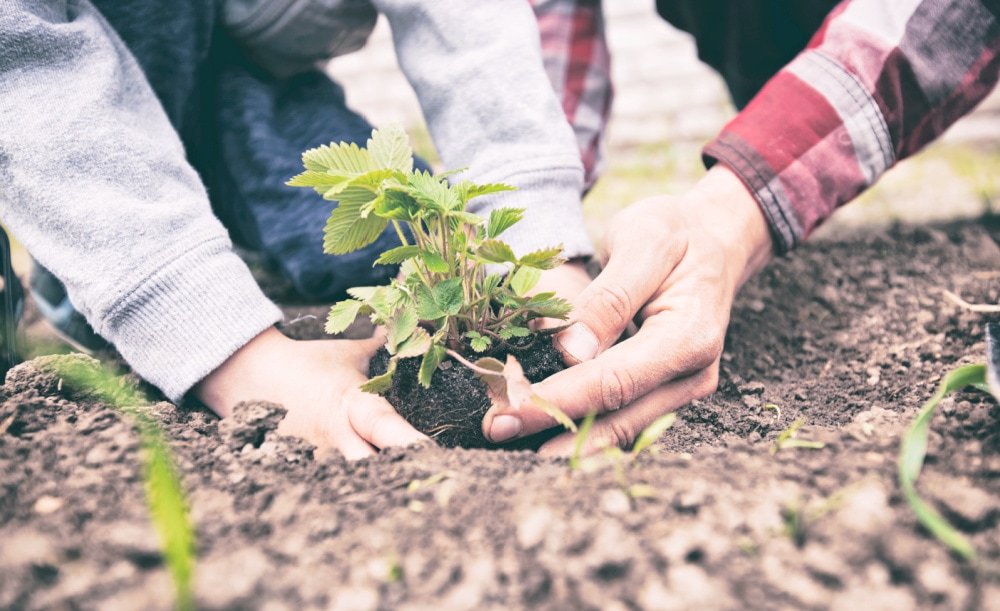 planting a garden to become self-reliant